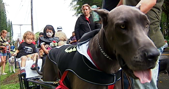 VIDEO: Dressed up pets on parade in Hilo