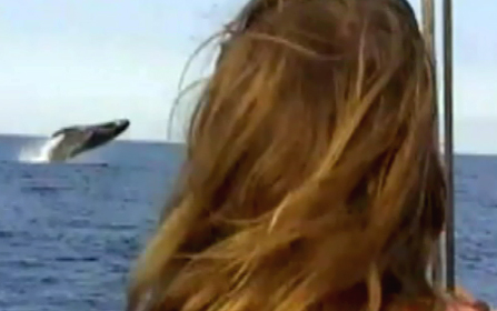 VIDEO: Whale watching in Hawaii is a scream, for some
