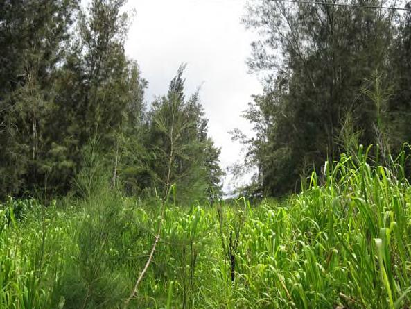 Hamakua lands – Big Island Video News timeline