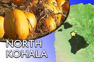 NORTH KOHALA: Pumpkin themed events this weekend