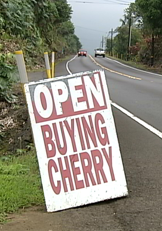 VIDEO: Kona Coffee buyers adjust price because of beetle