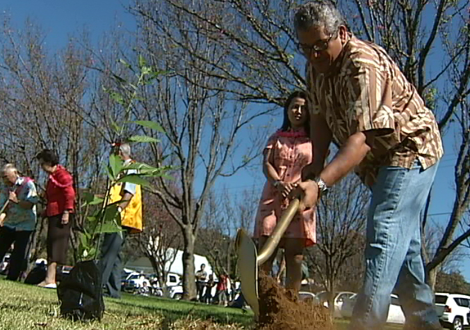 VIDEO: Centennial Cherry trees planted at Waimea fest
