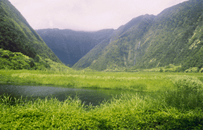Waipio Valley's Muliwai Trail closed for repairs