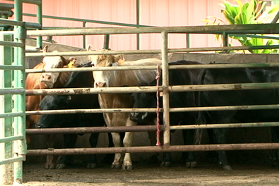 VIDEO: $4 million upgrade to Slaughterhouse begins