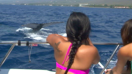 Humpback whale meets students off Kona coast