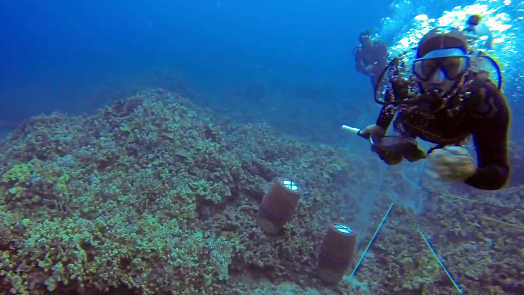 VIDEO: Underwater assault caught on camera