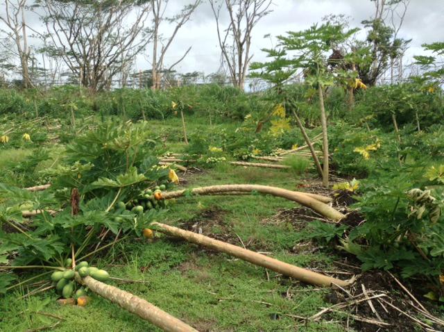 USDA Declares Hawaii County Natural Disaster Area