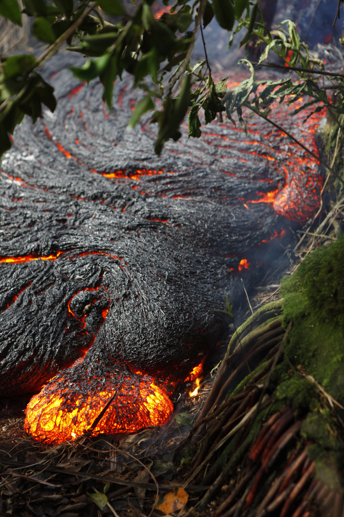 USGS HVO photo shows a pāhoehoe toe oozing out of the northern margin of the June 27th lava flow in thick forest, about 300 meters (328 yards) upslope of the leading edge of the flow.
