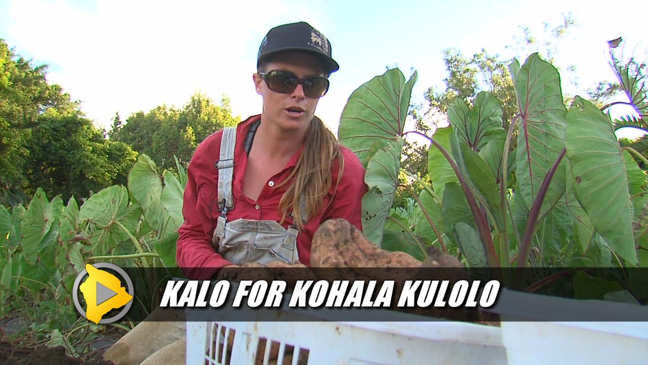 North Kohala Update – Sept. 8, 2015
