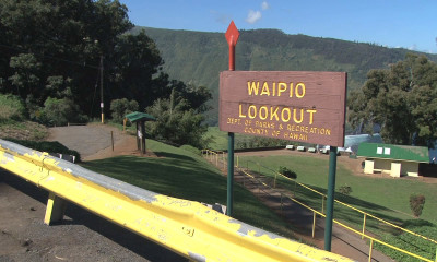 Dengue Fever Update: Waipio Valley To Close Friday For Spraying