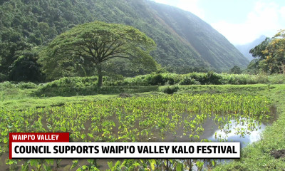 VIDEO: Council Supports Waipi'o Valley Kalo Festival