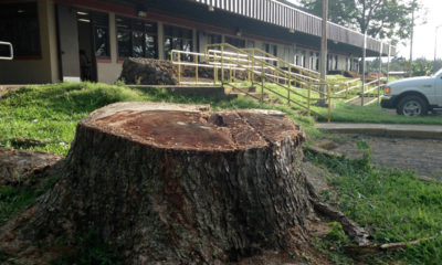 VIDEO: Cut Trees Remain Sore Subject In North Kohala