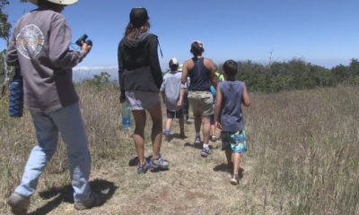 VIDEO: Palila Forest Discovery Trail Opens On Mauna Kea