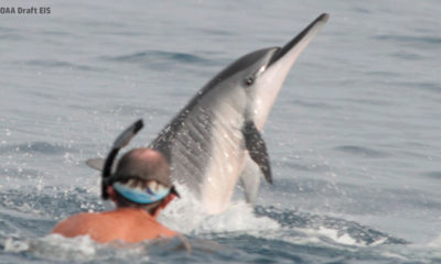 Stay 50 Yards Away From Hawaiian Dolphins, Feds Propose