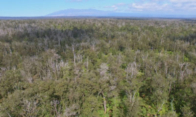 Federal Funds To Fight Rapid Ohia Death
