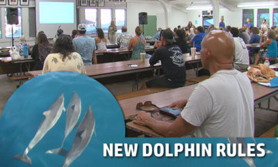 VIDEO: Dolphin Rules – Passionate Testimony Divides Crowd