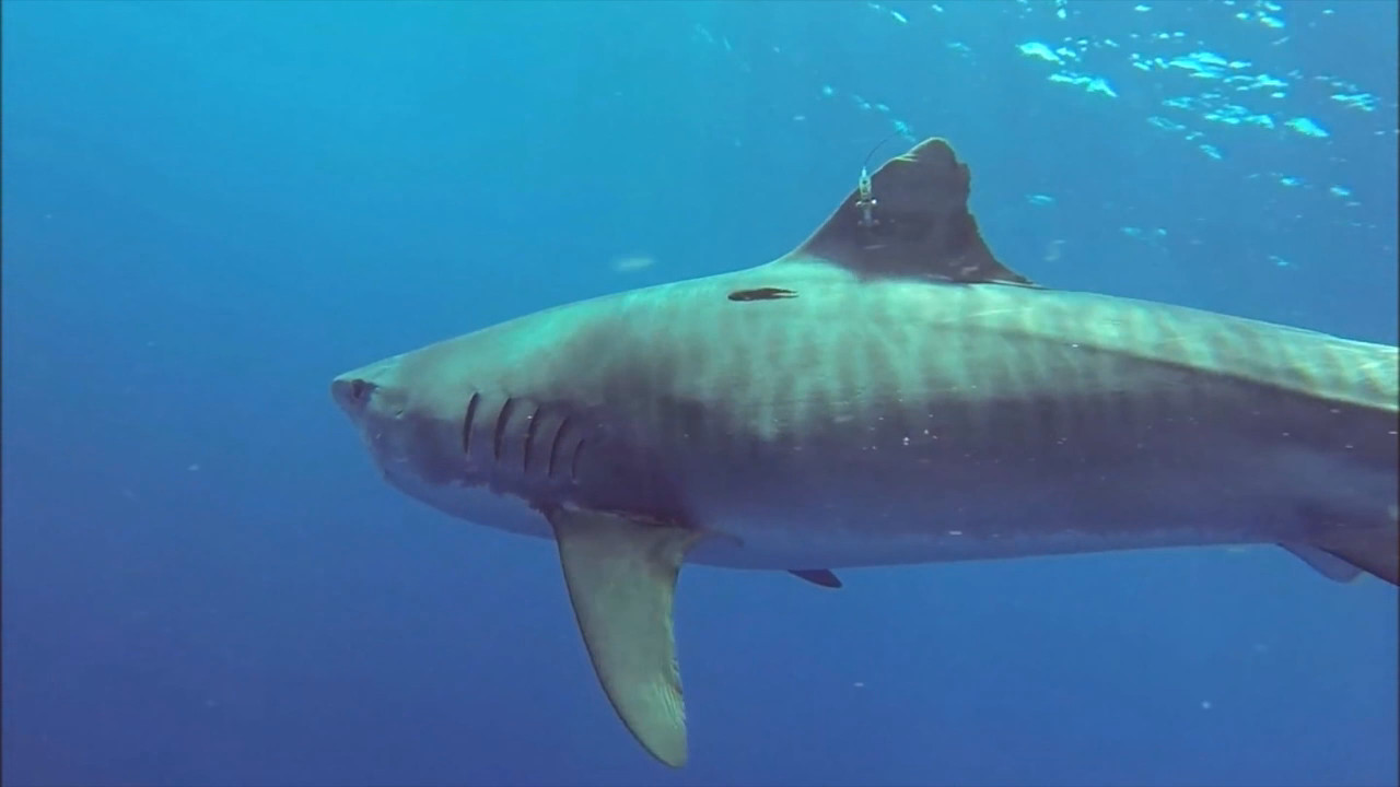 Hawaii Says Beware: Shark Bites Peak In October