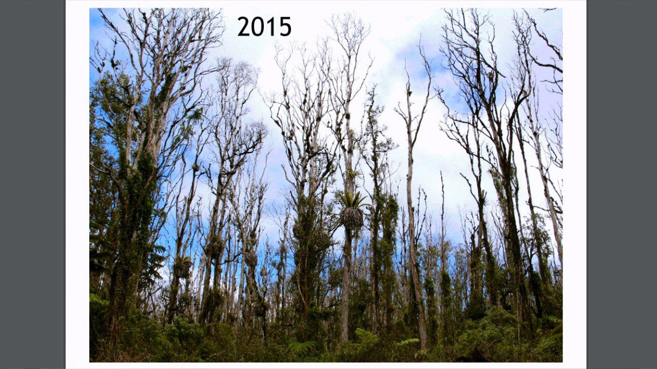 VIDEO: Rapid Ohia Death Presentation Given To County Council