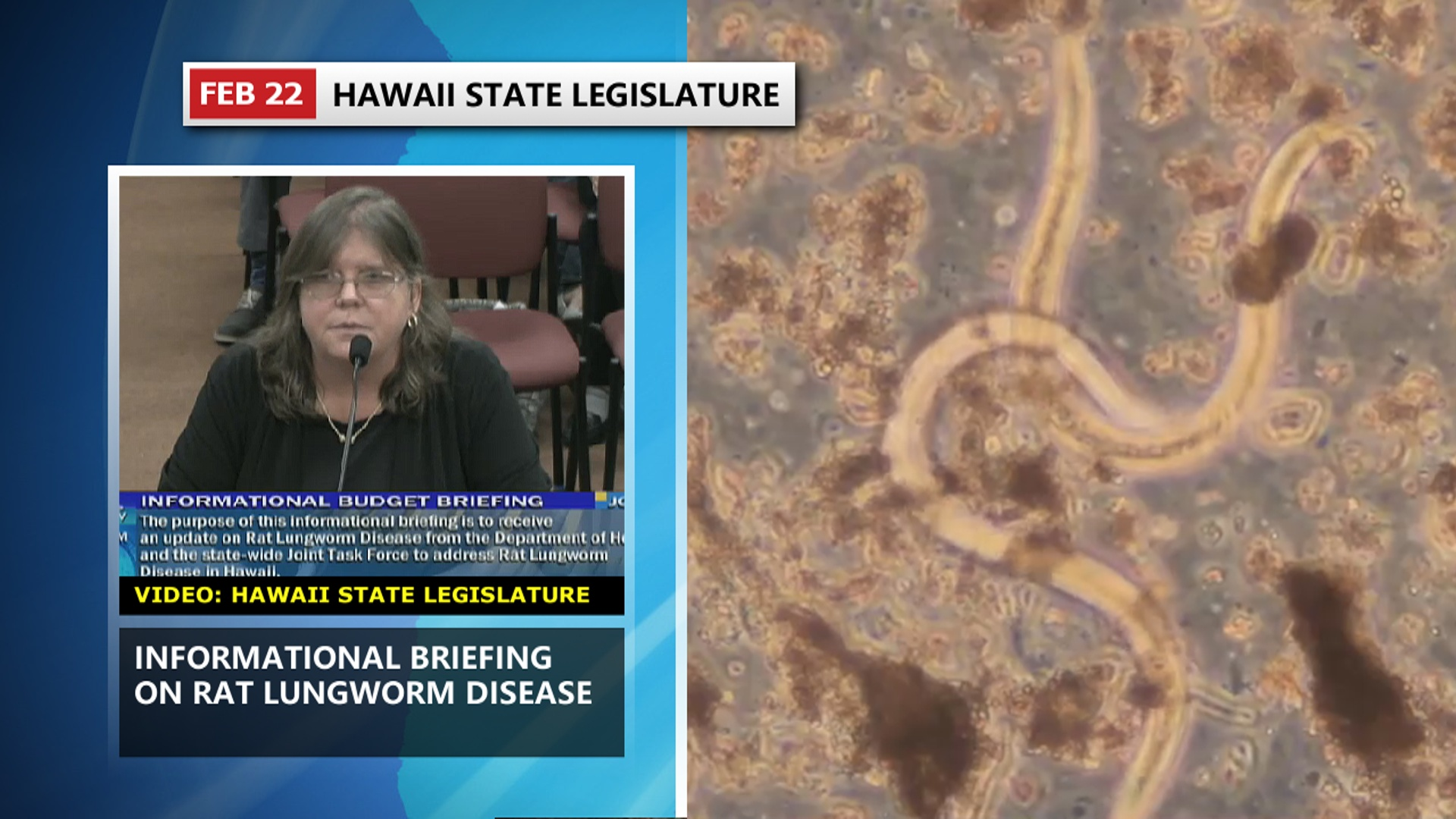 VIDEO: Rat Lungworm Disease Briefing At The Capitol