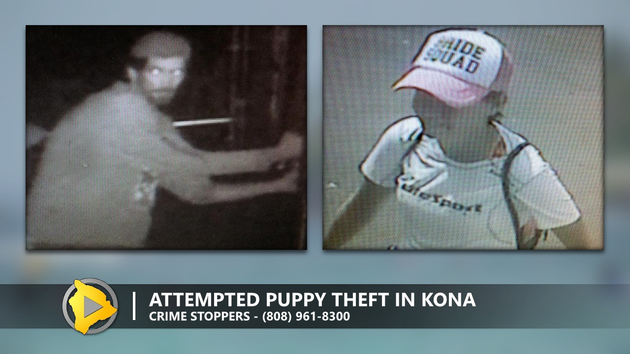 Police: Attempted Puppy Theft At Kona Humane Society