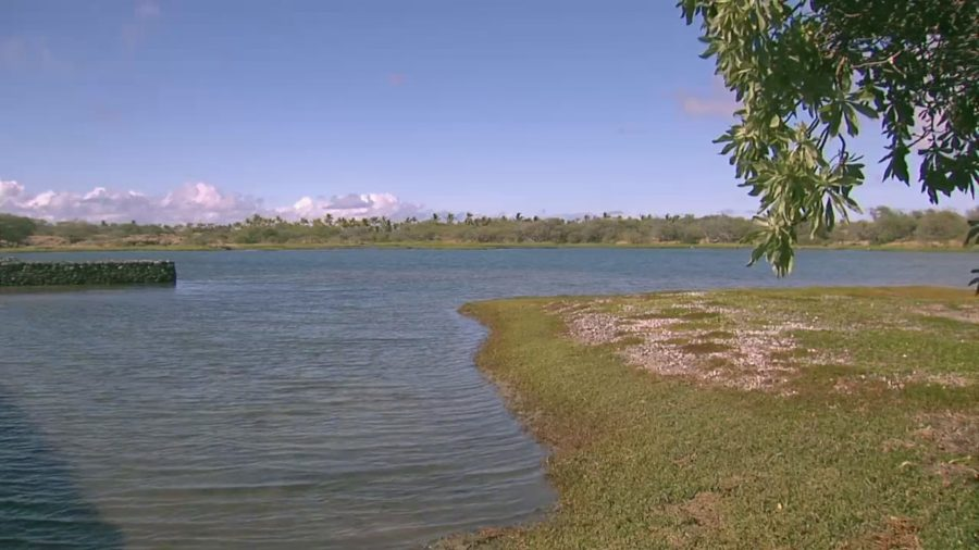 Kaloko Fishpond Access Road To Close For Coconut Trimming