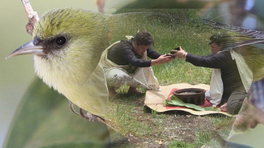 VIDEO: Ranger Rediscovers Native Bird's Lost Hawaiian Name