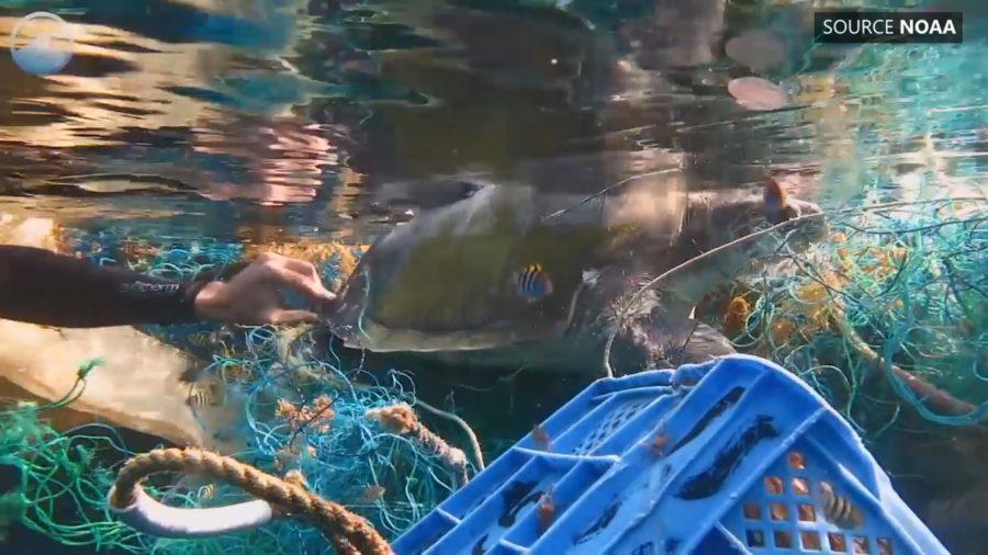 VIDEO: Senate Committee Examines Ocean Garbage