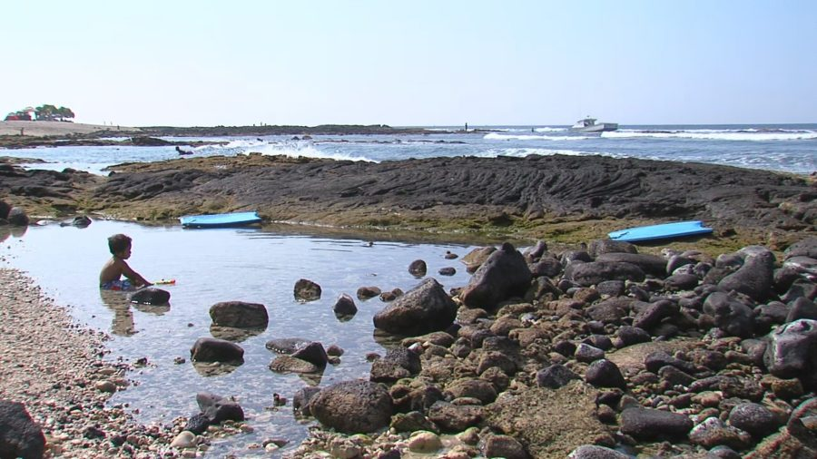 Kohanaiki Water Samples Show High Bacteria Levels