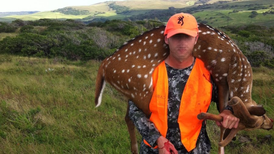 Axis Deer No More On Big Island, Officially