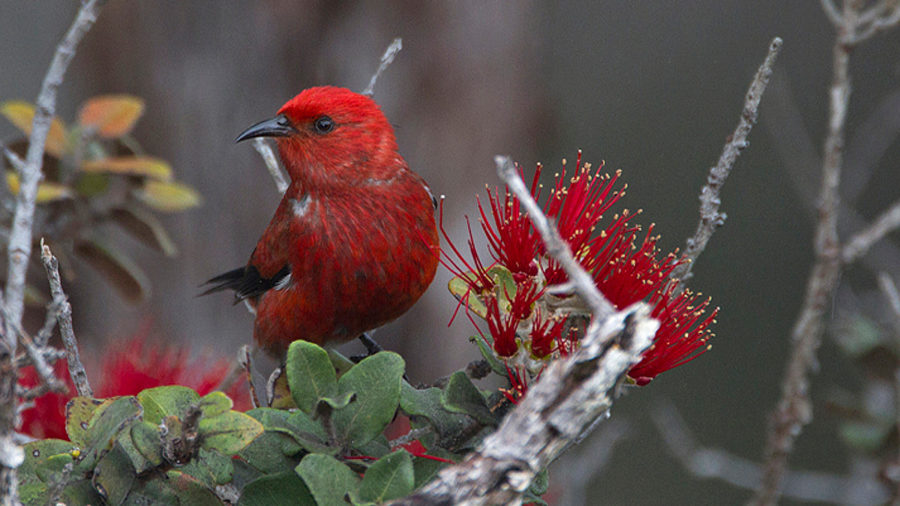 Hawaii Island Festival Of Birds Sets Event Schedule