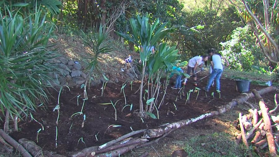 VIDEO: Pohaha I Ka Lani Seeks Grant For Waipio Lookout