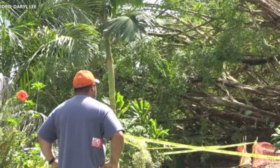 VIDEO: Under The Shadow Of The Banyan Tree
