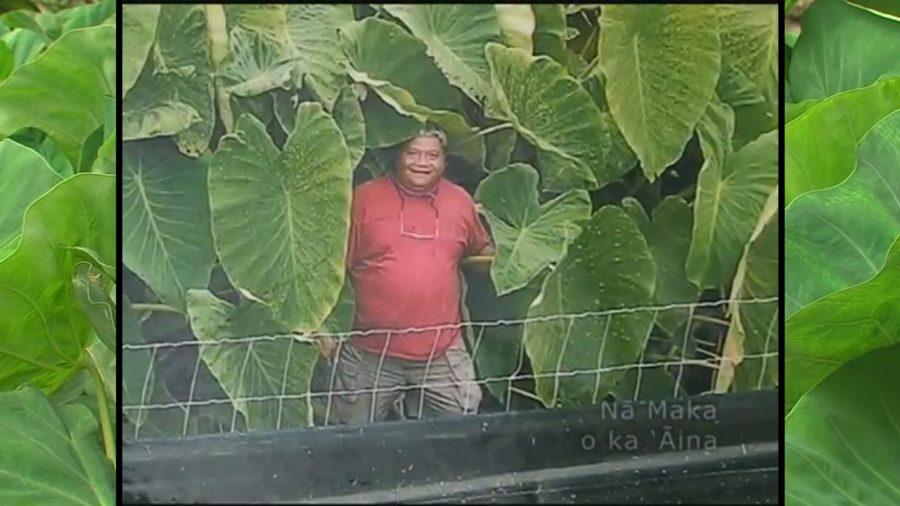 VIDEO: Jerry Konanui, Renowned Kalo Expert, Passes Away