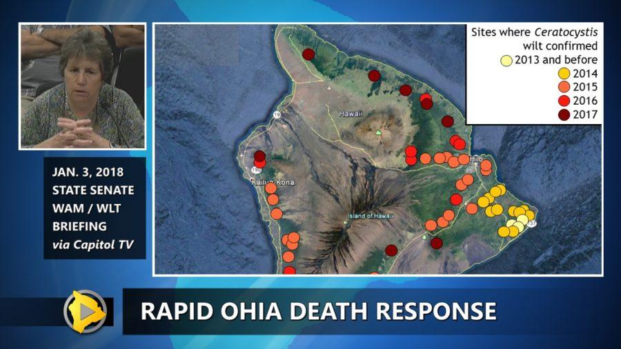 VIDEO: Rapid Ohia Death Response Update