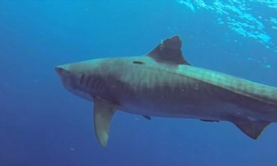 VIDEO: Shark & Ray Protection Bill Dies At The House