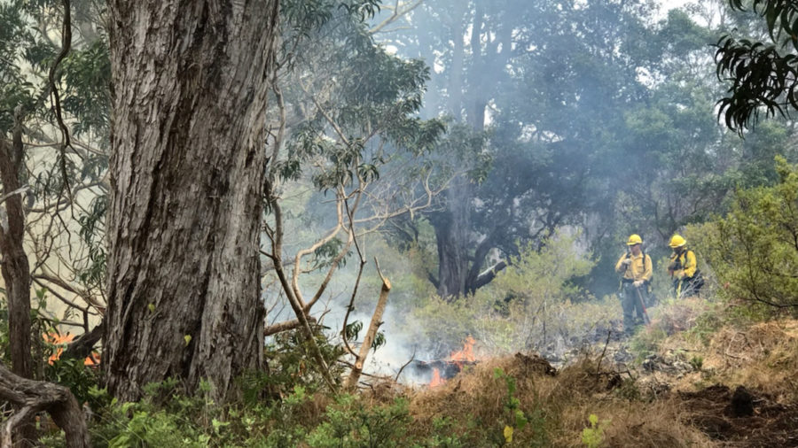 Mauna Loa Fire Prevented From Burning Kipuka Ki, So Far