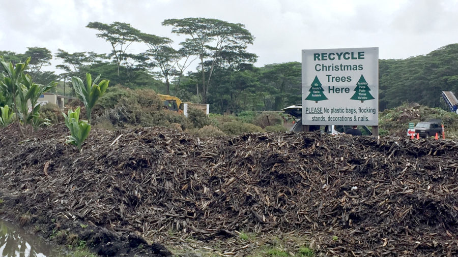 Christmas Tree, Kadomatsu Recycling On Hawaii Island Offered