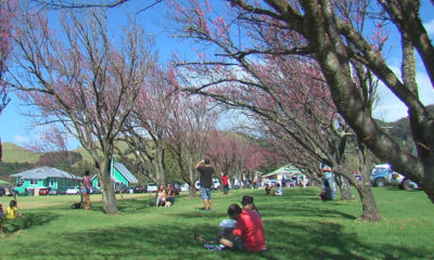 VIDEO: Waimea Cherry Blossom Fest Has Council Support
