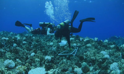 VIDEO: West Hawaii Reefs Show Signs Of Recovery