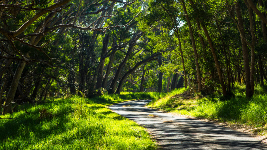 Mauna Loa Road, Two More Trails Open In Hawaii Volcanoes