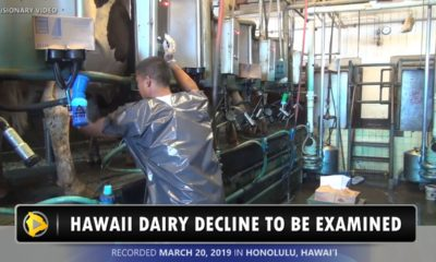 VIDEO: Senate Committee Votes To Examine Hawaii Dairy Decline