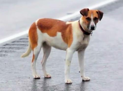 VIDEO: The mystery of the Saddle Road Dog