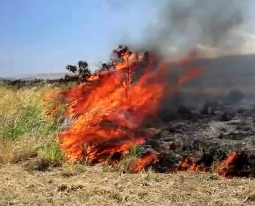 VIDEO: Fire near Punaluu closes Highway 11