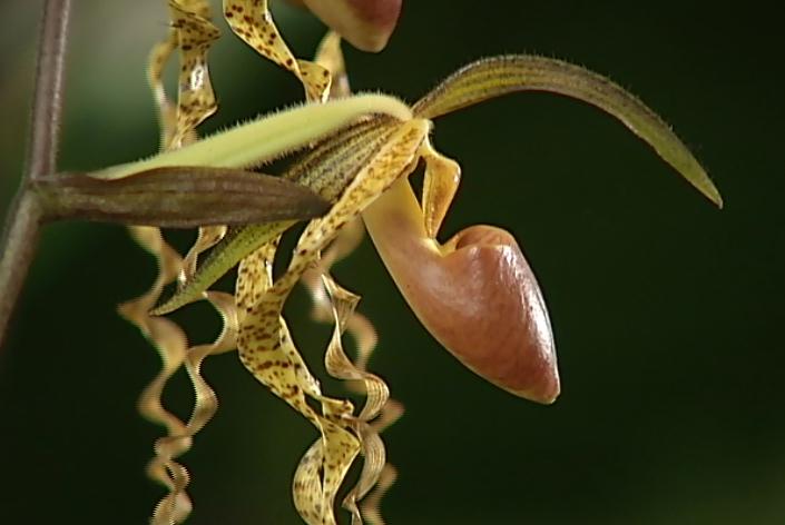 "VIDEO: An ""Orchid Safari"" in Hilo"