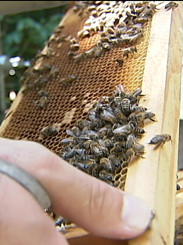 VIDEO: Beekeepers meet in Hawaii amidst struggle
