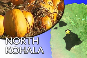 NORTH KOHALA: Pumpkin themed events this weekend