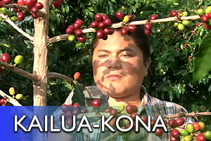 VIDEO: Kona Coffee Picking Contest
