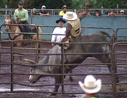 VIDEO: 20th annual Panaewa Stampede Rodeo