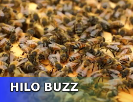 VIDEO: Wong, UH-Hilo honored for Adopt-a-Beehive effort