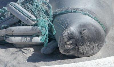 Hawaii fishermen asked to report monk seal hookings
